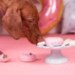 a photo of a vizsla puppy at a cake smash photo session